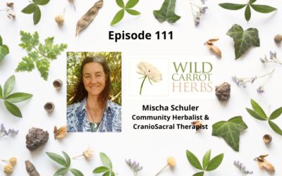 Using Herbs & Plants as Medicine – Mischa Schuler